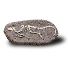 Bones&More, Duży szkielet dinozaura - wykopalisko na kamieniu