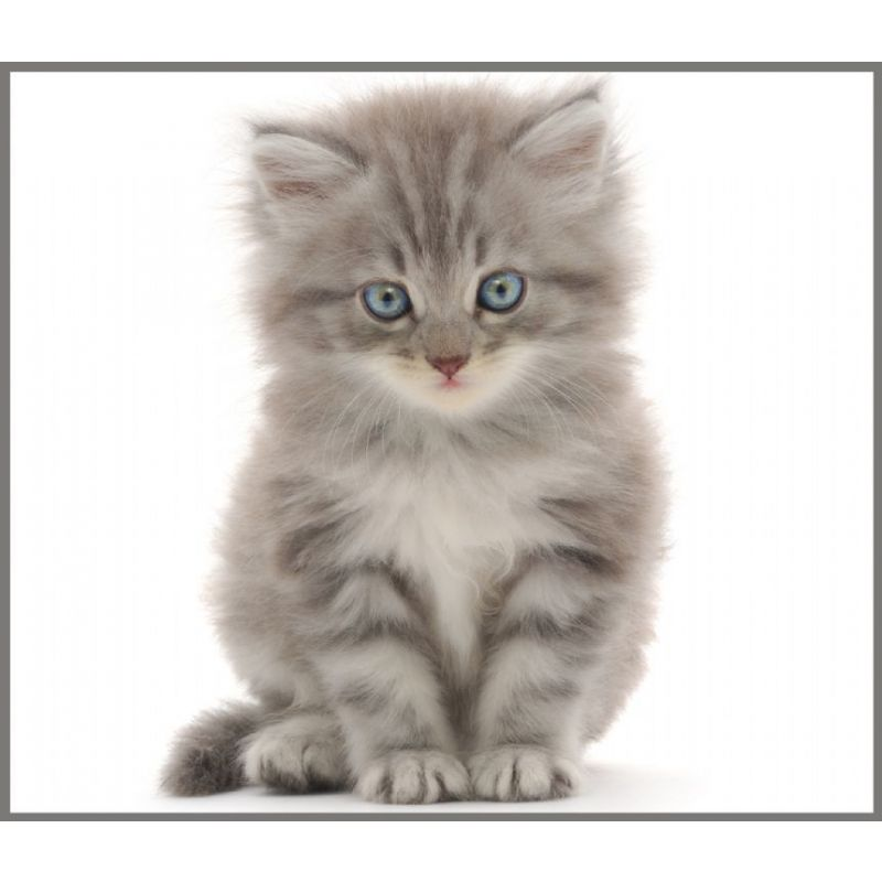 Projektor - Cute & Cuddly