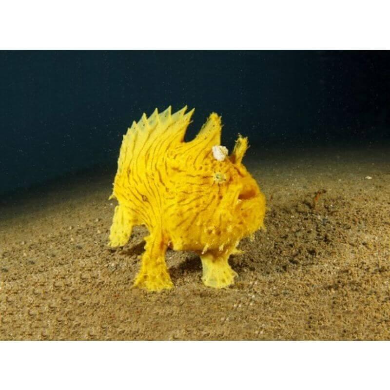 Projektor - Zwierzęta Wodne